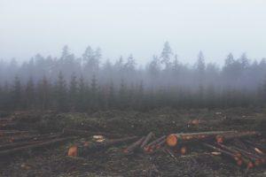 Mining and Deforestation
