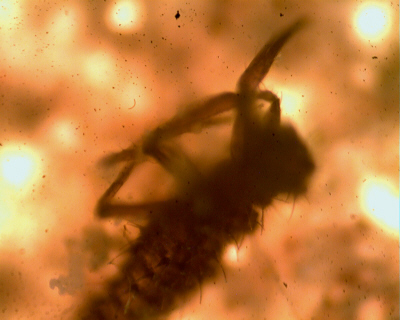 Insect dust image.  Images are breathed in all the time.